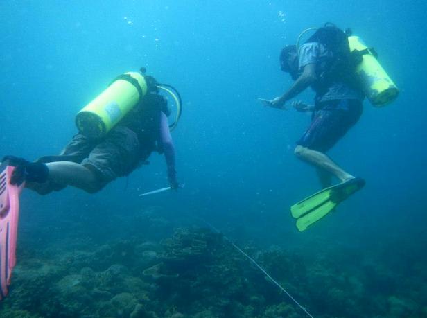 sdg14net-niaksblog-reefsurvey-jtp